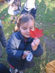 IMG 6497 e1542039738704 225x300 Collecte de feuilles au Parc Verdun