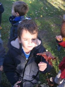 IMG 6500 e1542039702263 225x300 Collecte de feuilles au Parc Verdun