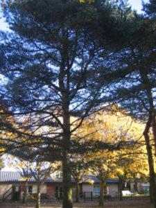 IMG 6514 e1542039590271 225x300 Collecte de feuilles au Parc Verdun