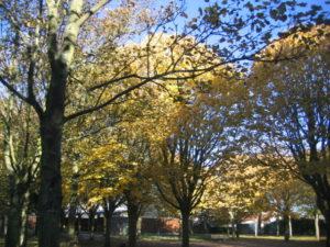 IMG 6515 300x225 Collecte de feuilles au Parc Verdun