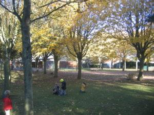 IMG 6516 300x225 Collecte de feuilles au Parc Verdun