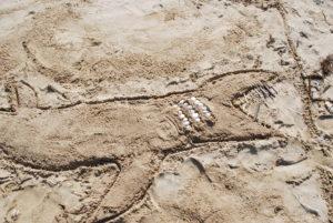 DSC 0035 300x201 Land art à la plage en CE2 CM1