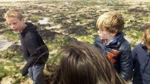 etude algues brunes 5 300x168 Etude des algues brunes
